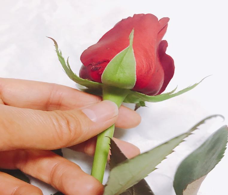 バラの茎で鮮度を確認