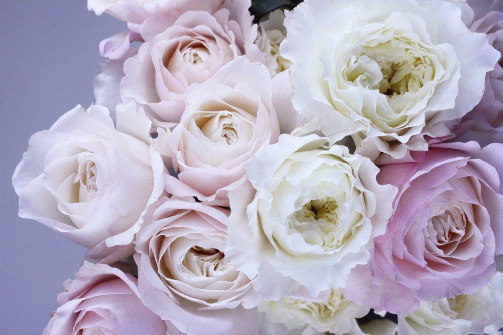 薔薇白ピンク