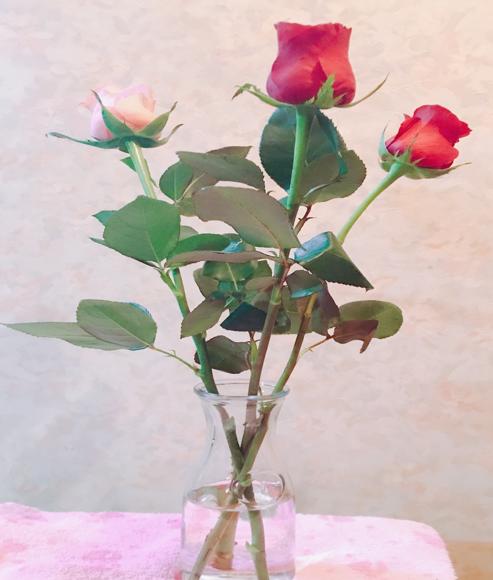 薔薇花瓶に生ける
