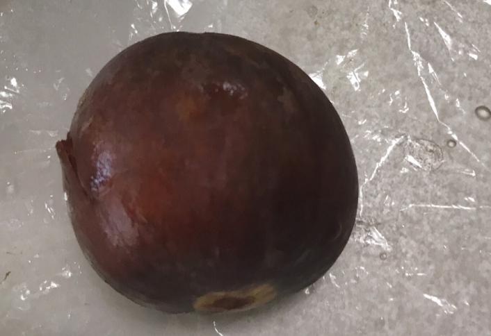 アボカドの種サランラップ
