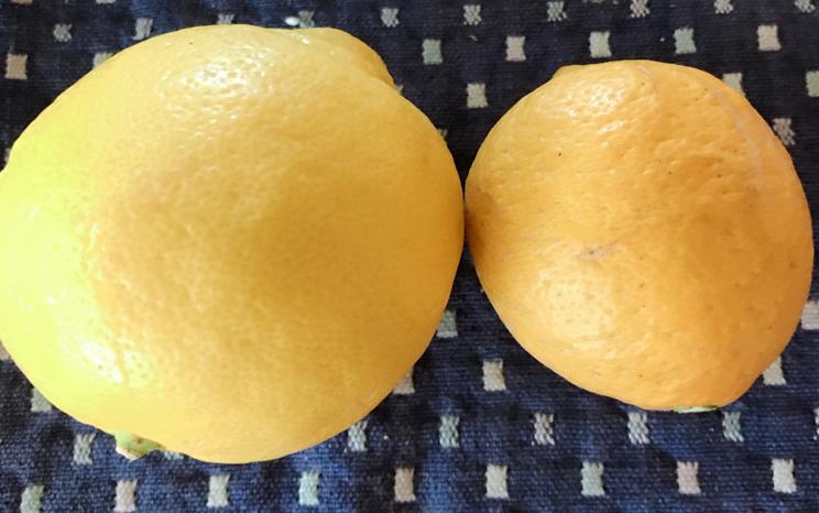 国産無農薬とレモン外国産レモン