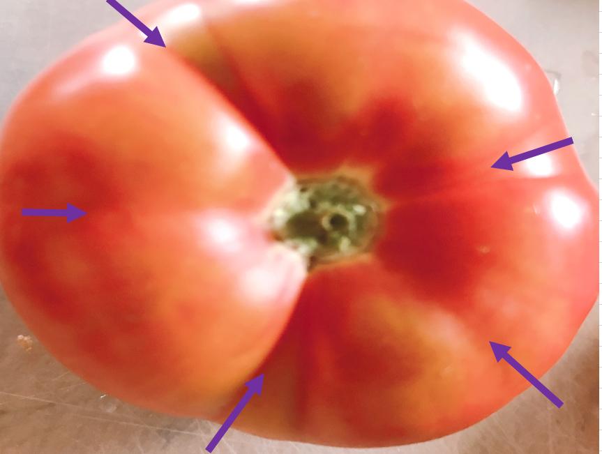 トマトの溝に沿って包丁を入れる向き