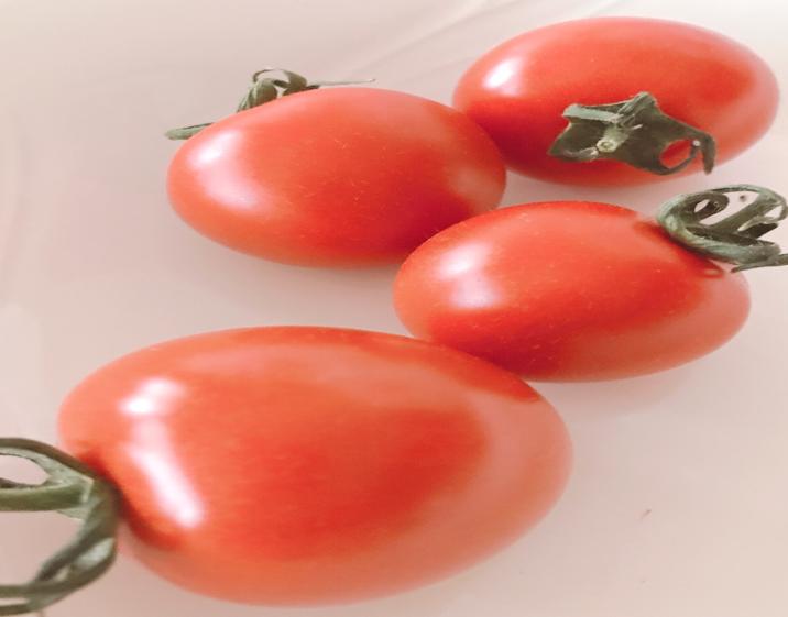 フルートトマトのフルティカ