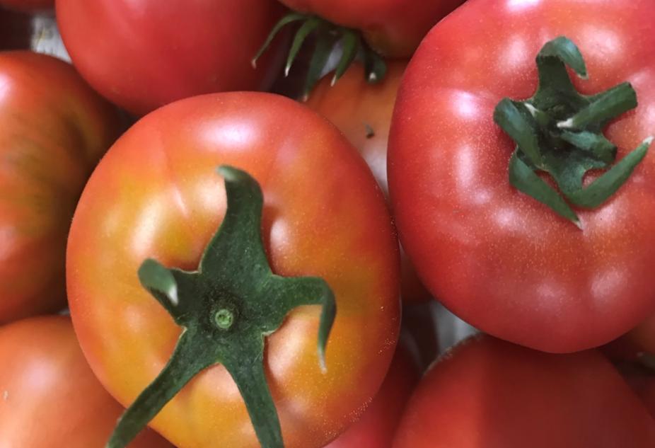 フルーツトマトのヘタ