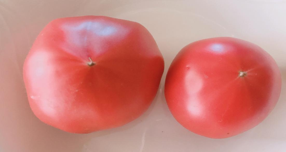 フルーツトマト大玉小玉
