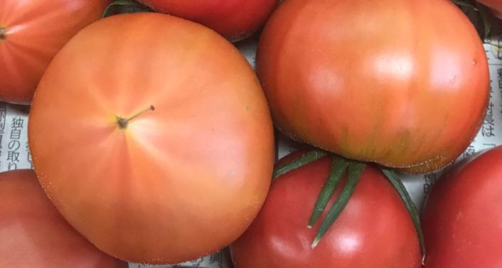 未熟なフルーツトマト
