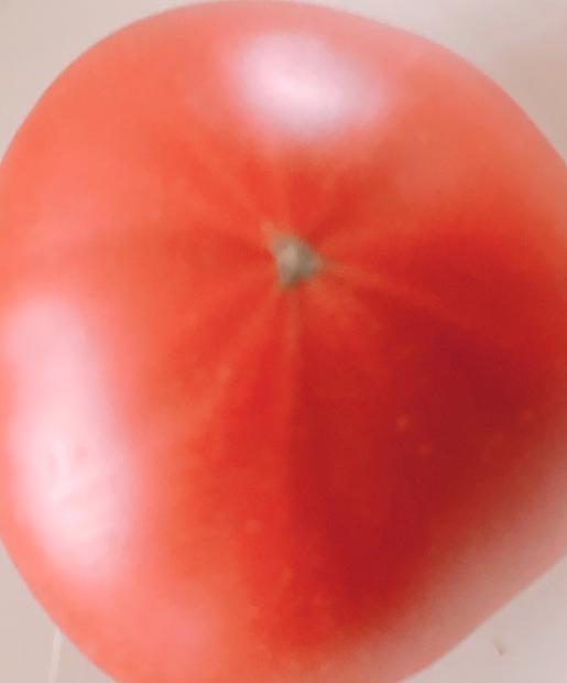 スターマークがるトマト
