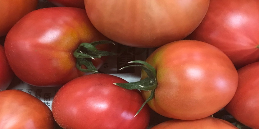 トマトのヘタが反り返っている