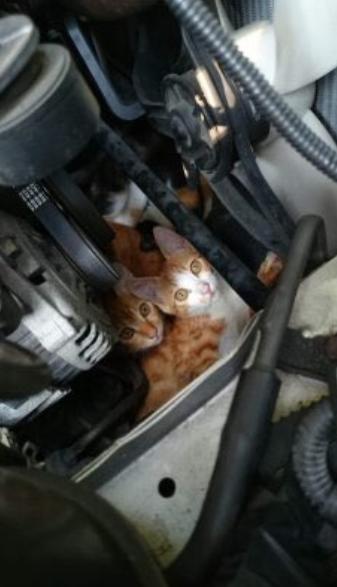 エンジンルームの猫