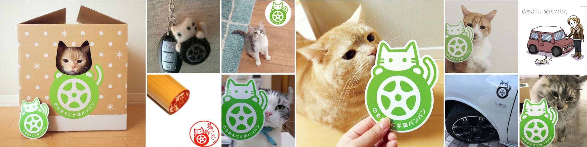 猫バンバン画像